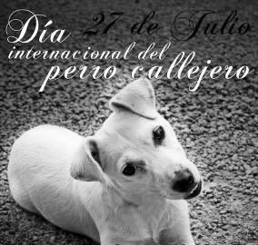 dia-del-perro-callejero