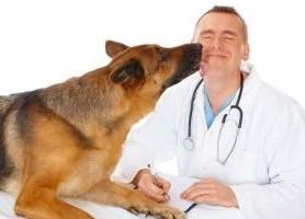 dia_del_veterinario